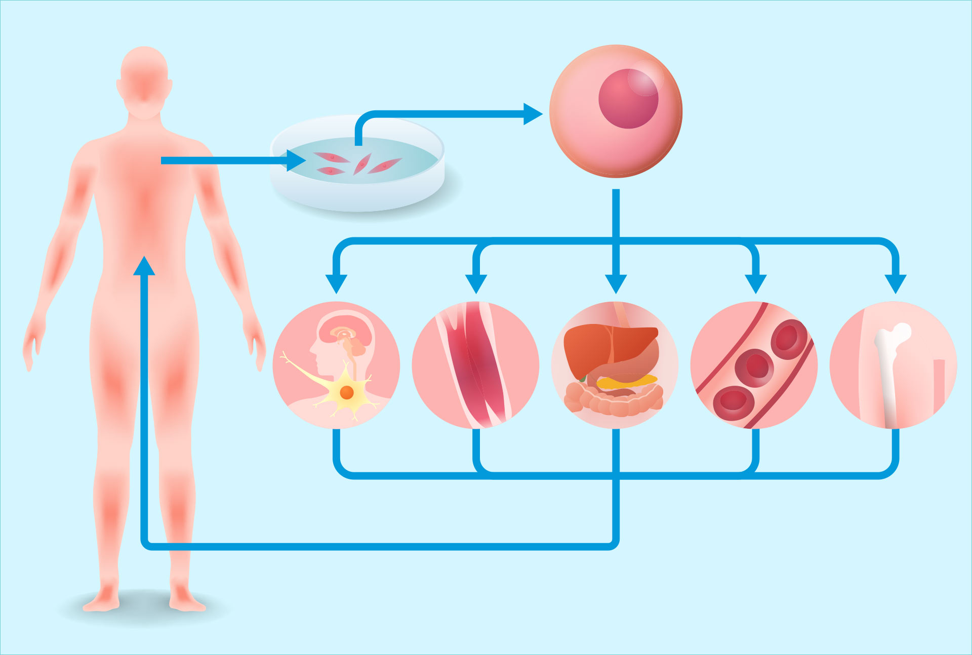Stem cell therapy by Dr. Weiss